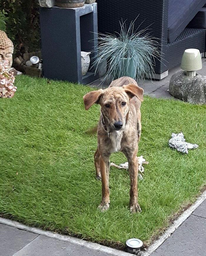 06-woman-finds-dog-broken-spine-greece