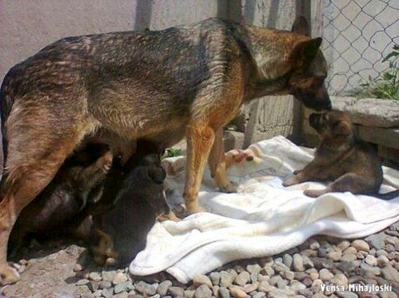 07-story-behind-the-dog-who-dug