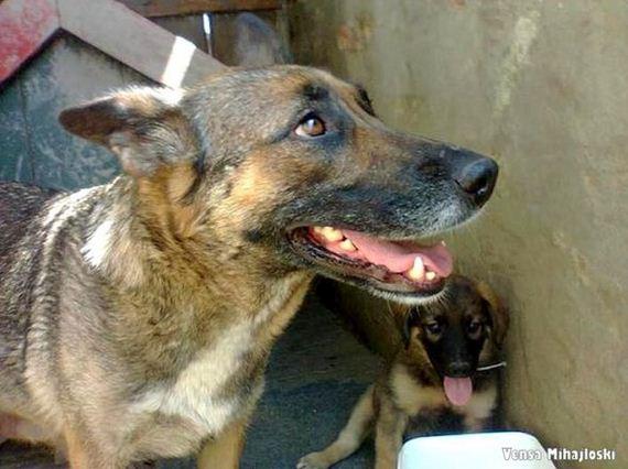 09-story-behind-the-dog-who-dug