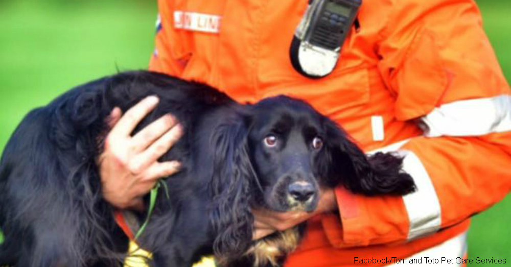 Lucky Dog! This Cocker Spaniel Survived Two Weeks at the Bottom of a Well