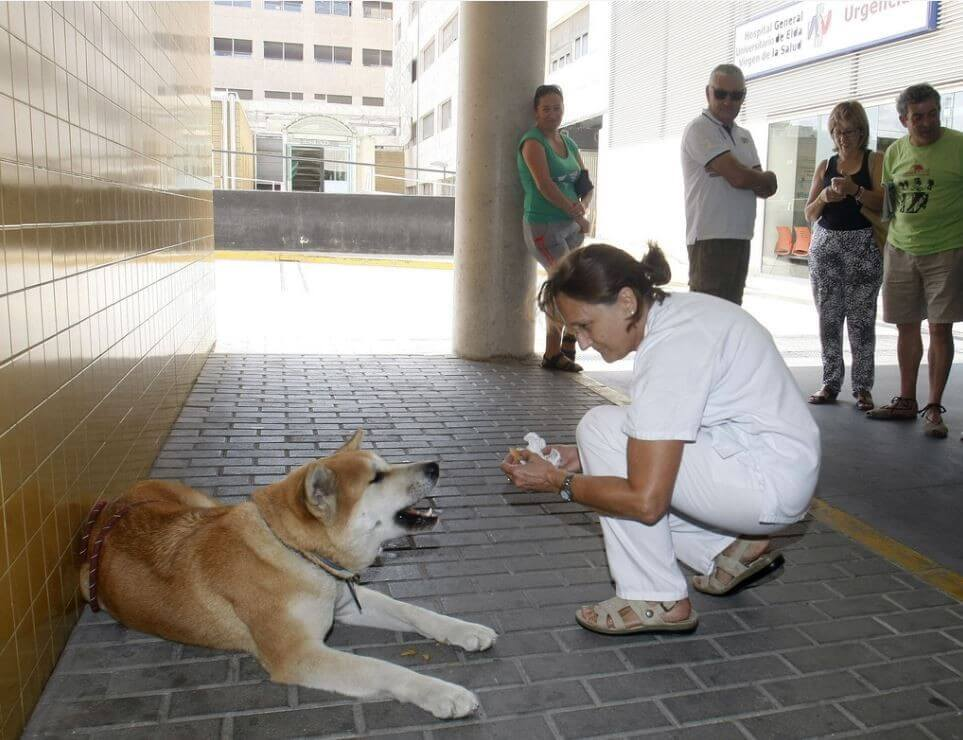 Faithful Dog Sat Outside This Hospital, Then The Nurses Find Out The Heartwarming Reason
