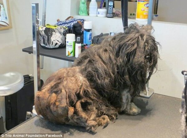 Homeless Dog Gets Her First Groom In Years And Looks Completely Unrecognizable