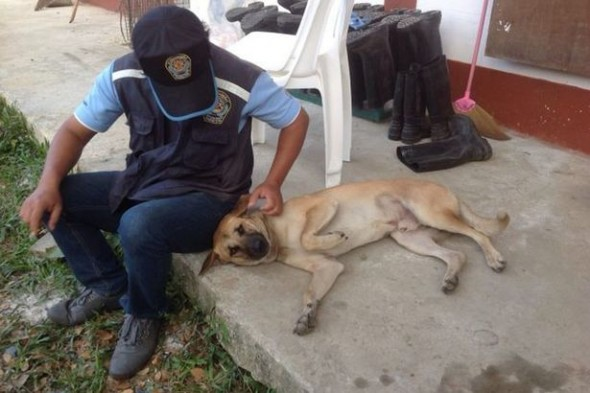 Dog Who Escaped Illegal Abattoir Gets New Home in Italy