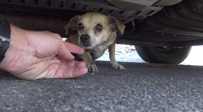 Watch How A Small Microchip Ended Up Changing This Dog's Life