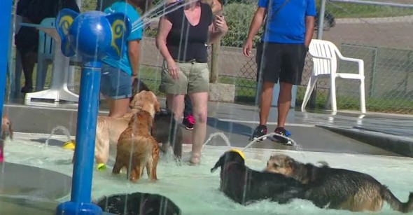 Water Park in Idaho Opens Doors to Dogs on Final Day of Season