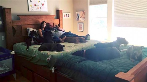 King Size Wasn't Big Enough for Eight Dogs, So Mom and Dad Built a Megabed!