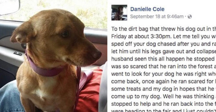 """Woman's FB Message To The """"Dirtbag"""" Who Dumped This Dog Goes Viral"""