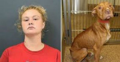 Woman Who Severely Abused Her Dogs Is Banned From Owning Dogs For Her Entire Life