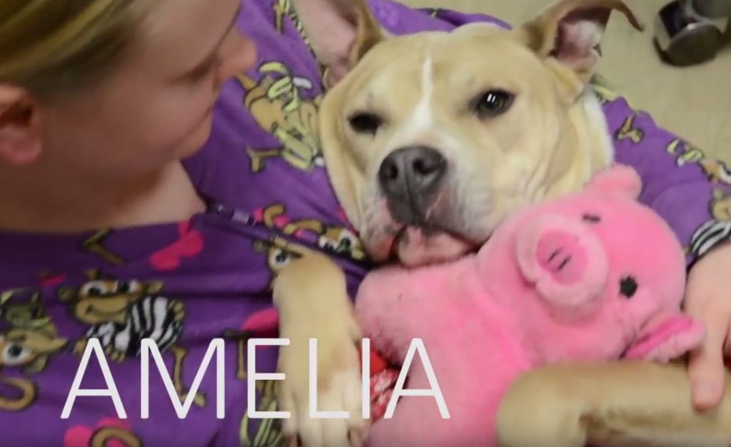This Animal Shelter Is Encouraging Adoptions With Puppy Pajama Parties
