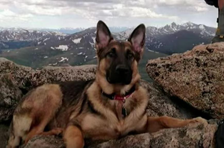 Lightning Strikes Hiker And Nearly Kills Him, But His Loyal Dog Saves His Life