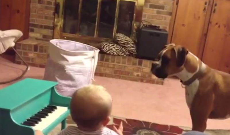 This Dog And Tiny Baby Make The Cutest Music Together — This Is Too Funny!