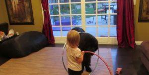 dog-hula-hoop