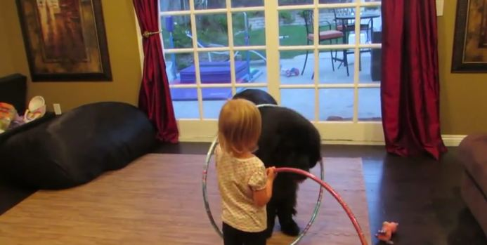 You Haven't Seen Cute Until You've Seen This Little Girl Teaching Her Dog To Hula Hoop