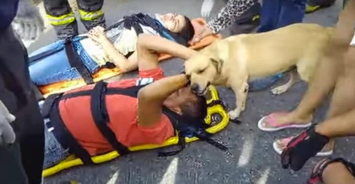 Dog Shows Up At Scene Of Accident To Comfort His Injured Owner