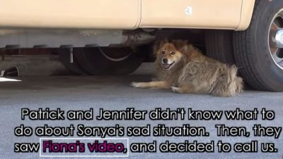 Dog Was Missing For Almost 10 Years Before Someone Found Her On Google Maps