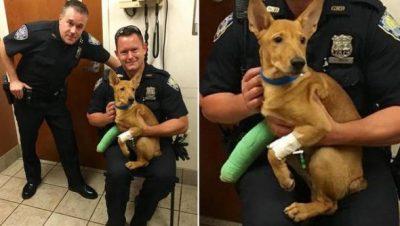 Port Authority Cops Rescue Dog Hit by Truck on Bridge