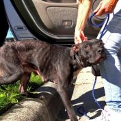 Dog Infested with Mange Rescued from Crackhead's Apartment