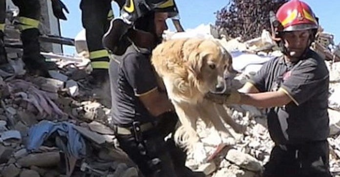 9 Days After Nearly Being Crushed In Earthquake, Dog Is Finally Found Alive In Rubble