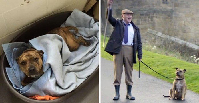 'World's Loneliest' Shelter Dog Has New Life As A Movie Star