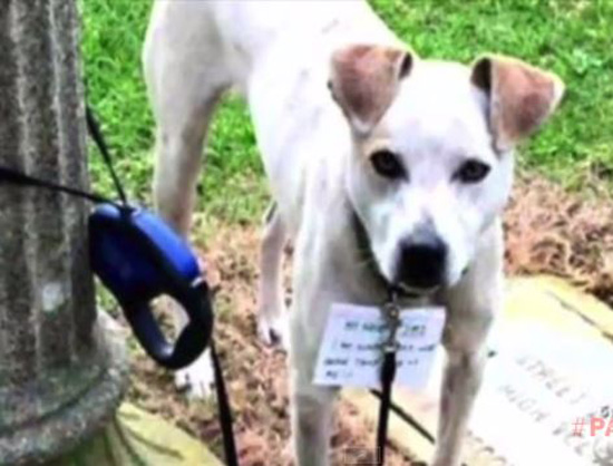 Unlikely Rescuer Walks Three Miles to Rescue a Dog Tied to Pole
