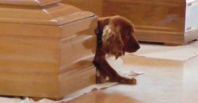 Dog Who Lost His Owner Doesn't Want To Say Goodbye