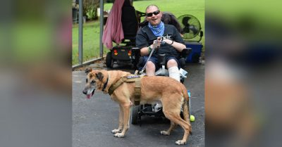 Sheriff's Deputy and Canine Partner Reunite After 5 Years of Heartbreaking Separation