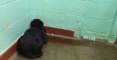 Once A Dog Is Surrendered, This Is What He Feels – Depression And Lonliness