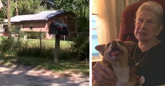 Rescue Dog Barks For 5 Hours To Save 92-Year-Old Owner After She Fell Behind Bushes