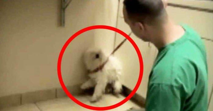 Dog Was About To Be Put Down, Then A Simple Hug Changed Everything…What A Sweet Girl.