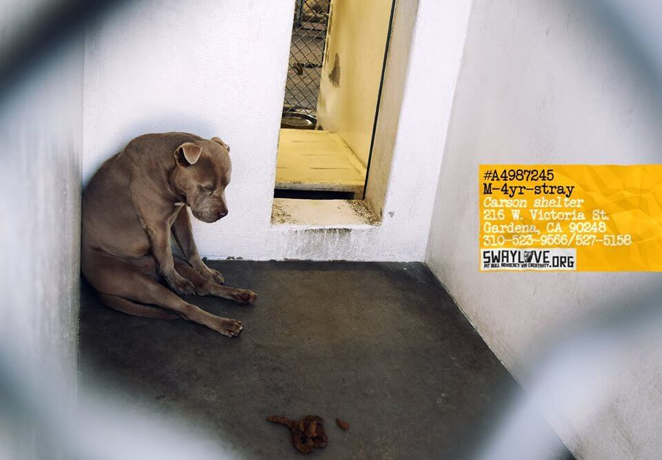 utter-hopelessness-stray-dog1