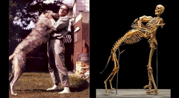 Anthropologist Donates His and His Dog's Bodies to the Smithsonian