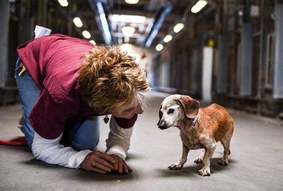01-blind-dog-shelter-hug