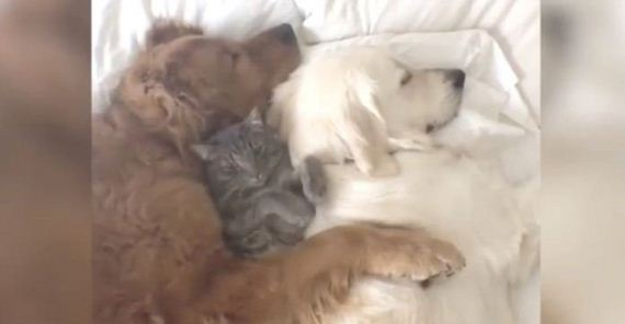 Mom Spots Her 3 Babies Taking A Nap. But Look Closely At The Dog On The Left…