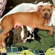 Rescue Dog Adopts Her Deceased Friend's Newborn Puppies
