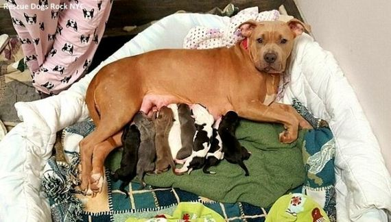Rescue Dog Adopts Her Deceased Friend's Newborn Puppies