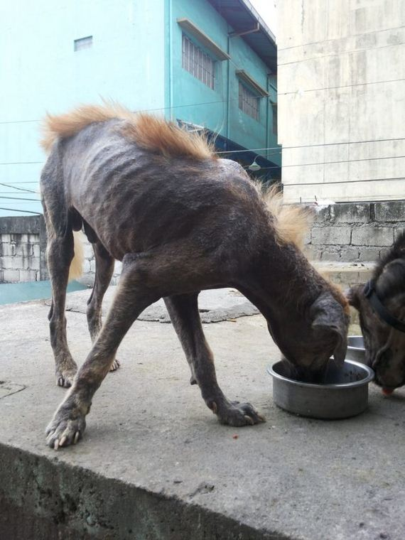 She Found These Dogs Living Amongst The Dead — So She Stepped In To Rescue Them