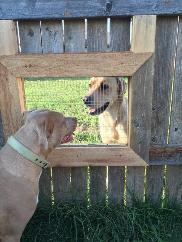 Guy Builds A Fence Window So His Dogs Can Talk To Their Friend Next Door
