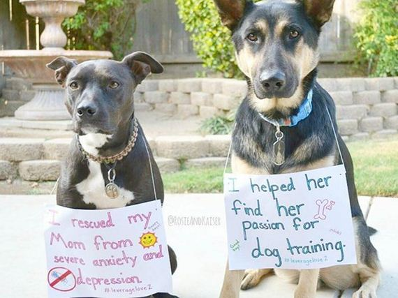 01-rescue-dogs-wear-signs-that-prove-they-werent-the-only-on