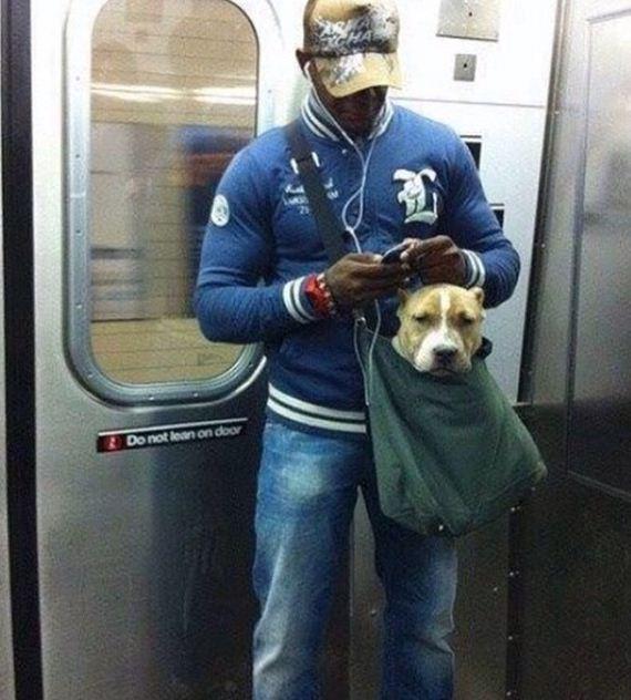 01-screen-dogs