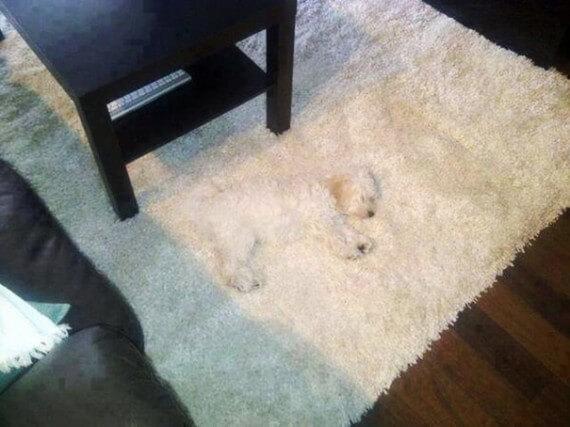 02-20-dogs-hide-seek