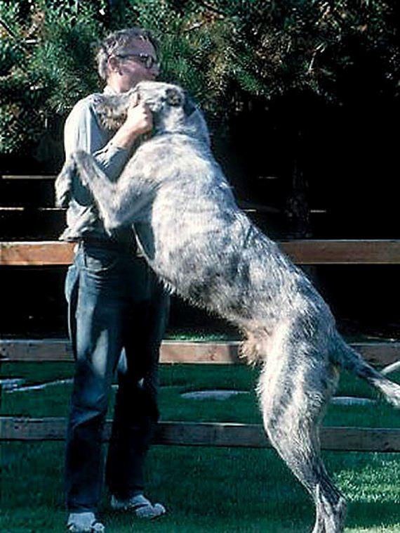 02-anthropologist-grover-krantz-dog-clyde