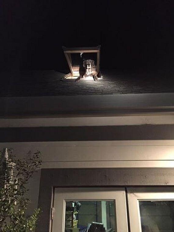 02-deputies-find-dog-skylight