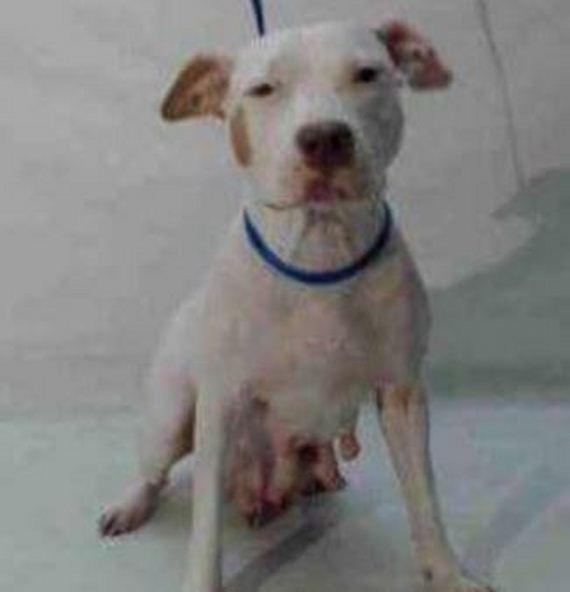 02-dog-puppies-shelter-orange-county