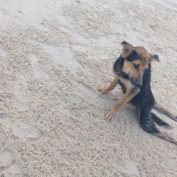 Town Refuses To Help Paralyzed Dog — Until A Model On Vacation Sees Him Dragging Along The Beach