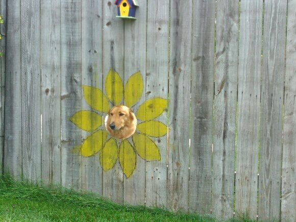 02-fence-window-for-dogs