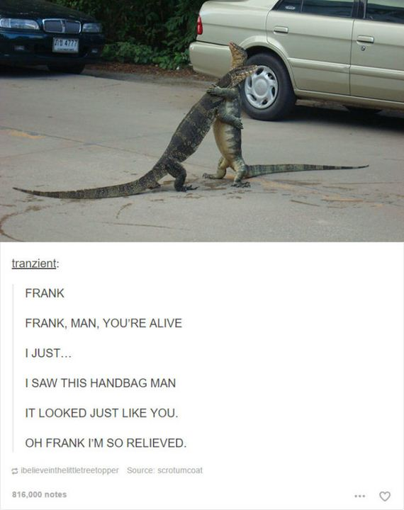 02-funny-animal