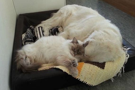 02-like-cats-and-dogs