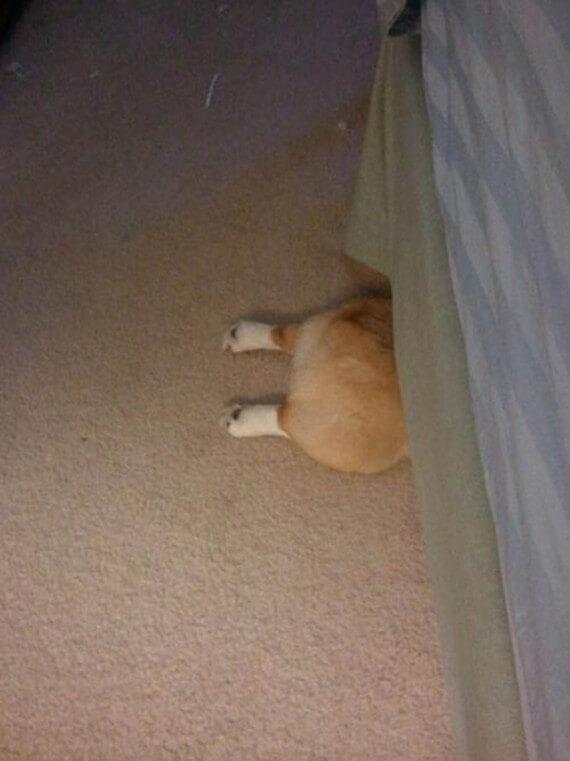 03-20-dogs-hide-seek
