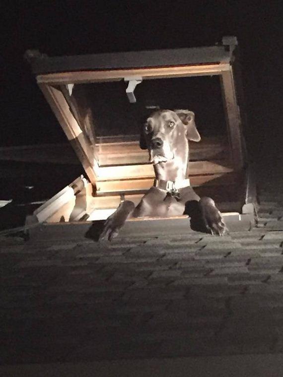 03-deputies-find-dog-skylight