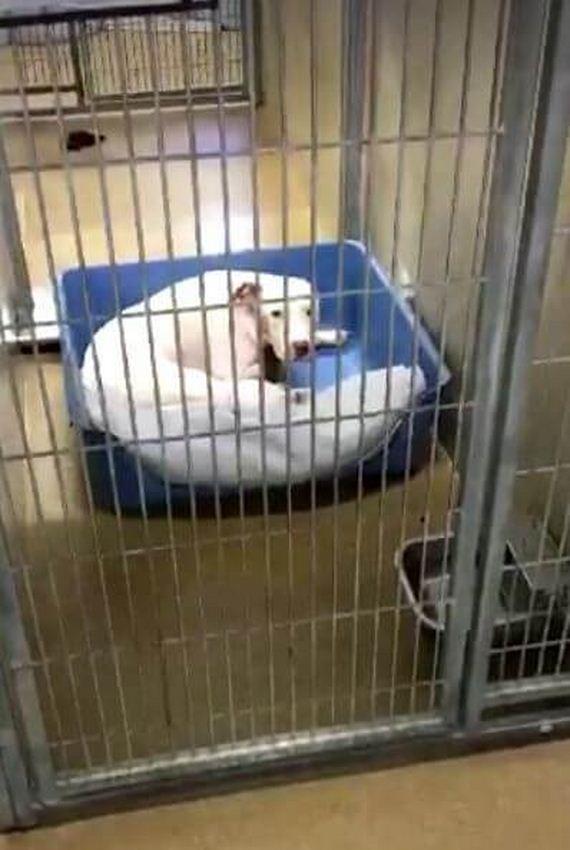 03-dog-puppies-shelter-orange-county